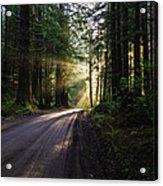 Sunburst At Redwood National Park Acrylic Print