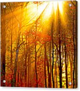 Sunburst In The Forest Acrylic Print