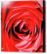 Sunburst On Red Rose With Framing Acrylic Print