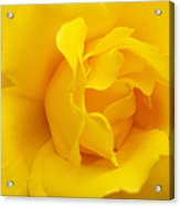 Sunburst Rose Flower Acrylic Print