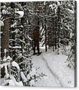Sundling Creek Snowshoe Acrylic Print
