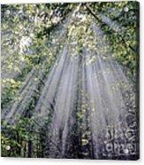 Sunfall Acrylic Print