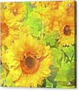 Sunflower 19 Acrylic Print
