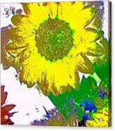 Sunflower 30 Acrylic Print