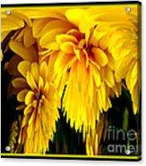 Sunflower Abstract 1 Acrylic Print