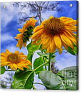 Sunflower Art Acrylic Print by George Paris