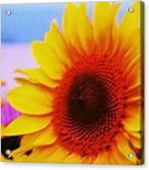 Sunflower At Beach Acrylic Print
