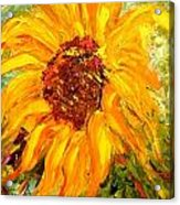 Sunflower Acrylic Print by Barbara Pirkle