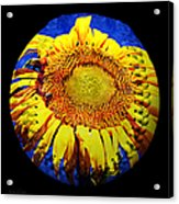 Sunflower Baseball Square Acrylic Print