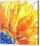 Sunflower Blue Orange And Yellow Acrylic Print