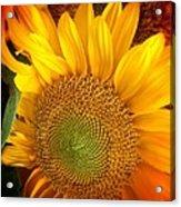 Sunflower Bright Acrylic Print