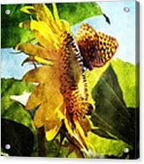Sunflower Butterfly And Bee Acrylic Print