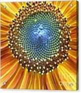 Sunflower Center Acrylic Print