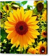 Sunflower Centered Acrylic Print