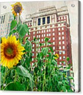 Sunflower City Acrylic Print
