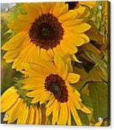 Sunflower Cluster Acrylic Print