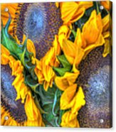 Sunflower Delight Acrylic Print