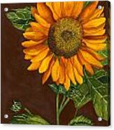 Sunflower Acrylic Print by Diane Ferron