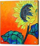 Sunflower Acrylic Print by Diane Fine