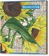 Sunflower Dictionary 1 Acrylic Print by Debbie DeWitt