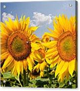 Sunflower Field And Blue Sky Acrylic Print