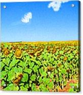Sunflower Fields Forever Acrylic Print