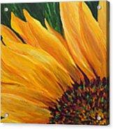 Sunflower From Summer Acrylic Print by Mary Jo Zorad