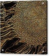 Sunflower Gold Leaf Sketch Acrylic Print