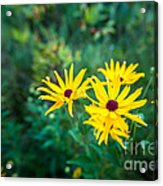 Sunflower Group Session Acrylic Print