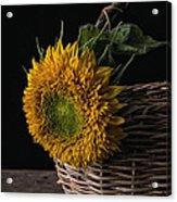 Sunflower In A Basket Acrylic Print