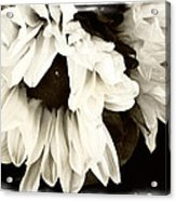 Sunflower In Black And White 1 Acrylic Print