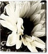 Sunflower In Black And White 3 Acrylic Print by Tanya Jacobson-Smith