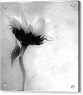 Sunflower In Profile Acrylic Print