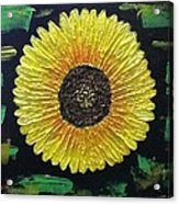 Sunflower Acrylic Print by Kat Poon