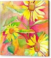 Sunflower Acrylic Print by Kelly Perez