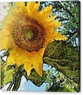 Sunflower Light Acrylic Print