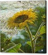 Sunflower Mountain Acrylic Print