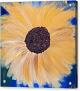 Sunflower Not Sunflower Acrylic Print