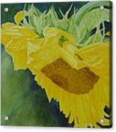 Sunflower Original Oil Painting Colorful Bright Sunflowers Art Floral Artist K. Joann Russell  Acrylic Print