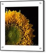 Sunflower Original Signed Mini Acrylic Print
