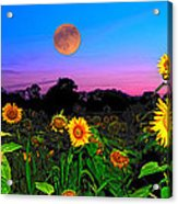 Sunflower Patch And Moon  Acrylic Print