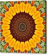 Sunflower Power Acrylic Print