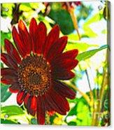 Sunflower - Red Blazer - Luther Fine  Art Acrylic Print