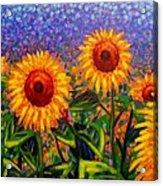 Sunflower Scape Acrylic Print