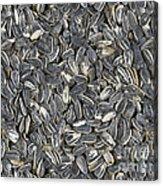 Sunflower Seeds Acrylic Print