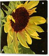 Sunflower Smile Acrylic Print