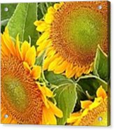 Sunflower Smiles Acrylic Print