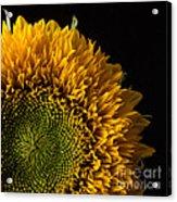 Sunflower Square Acrylic Print