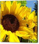 Sunflower Summer Garden Art Prints Acrylic Print
