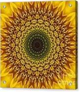 Sunflower Sunburst Acrylic Print by Annette Allman